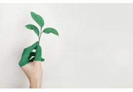 Les peintures écologiques